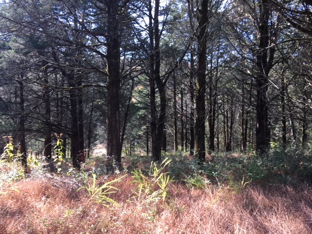 The Tennessee cedar glade--an indigenous ecosystem--at Owl Hill