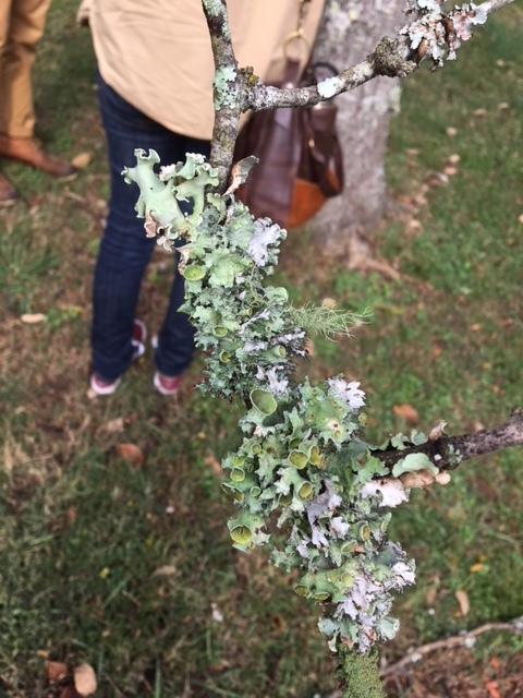 Lichen-crusted branches
