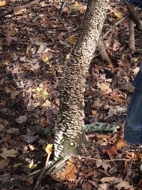 Mushroom log, still alive