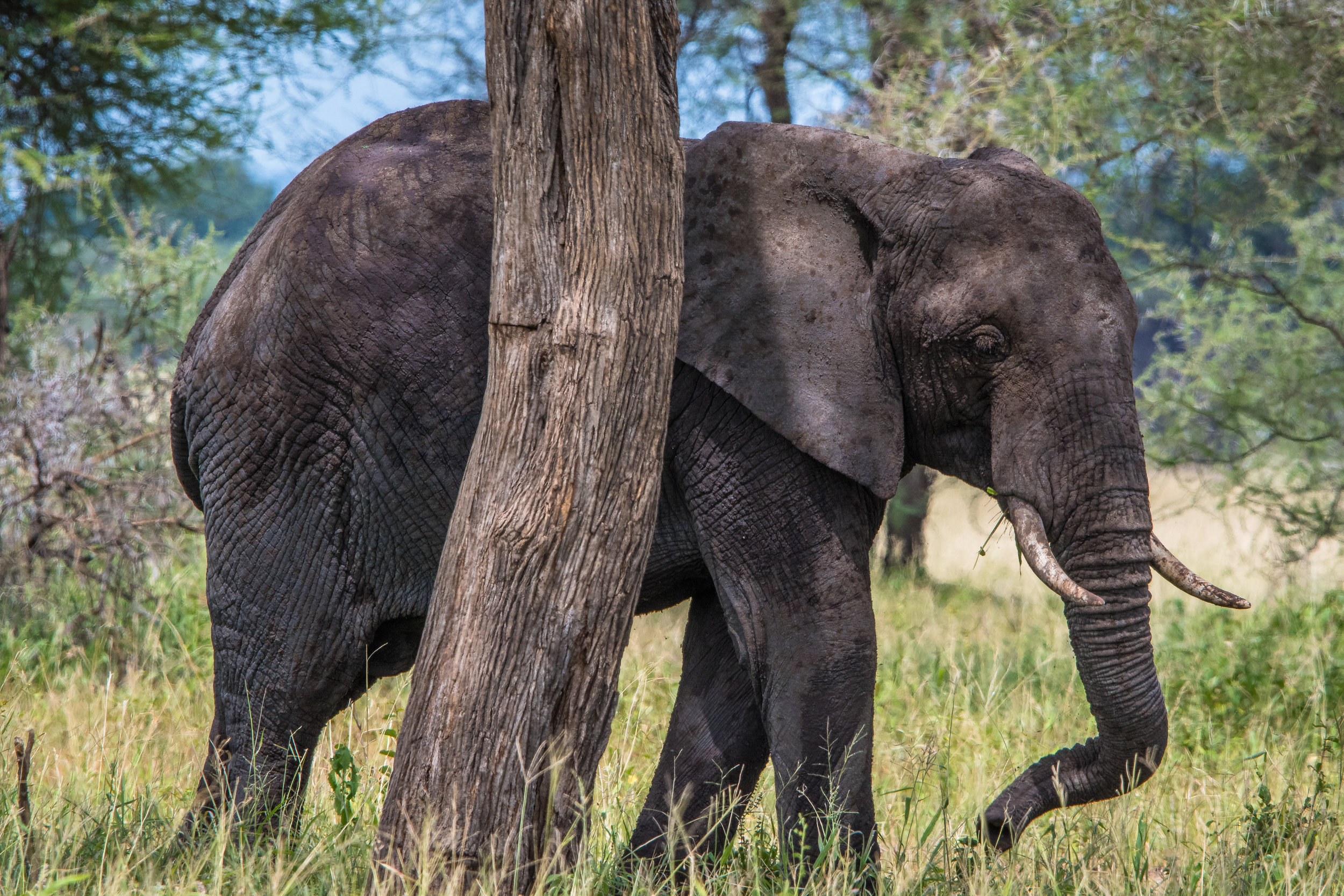 2018-3-6 - 02 Elephant.jpg