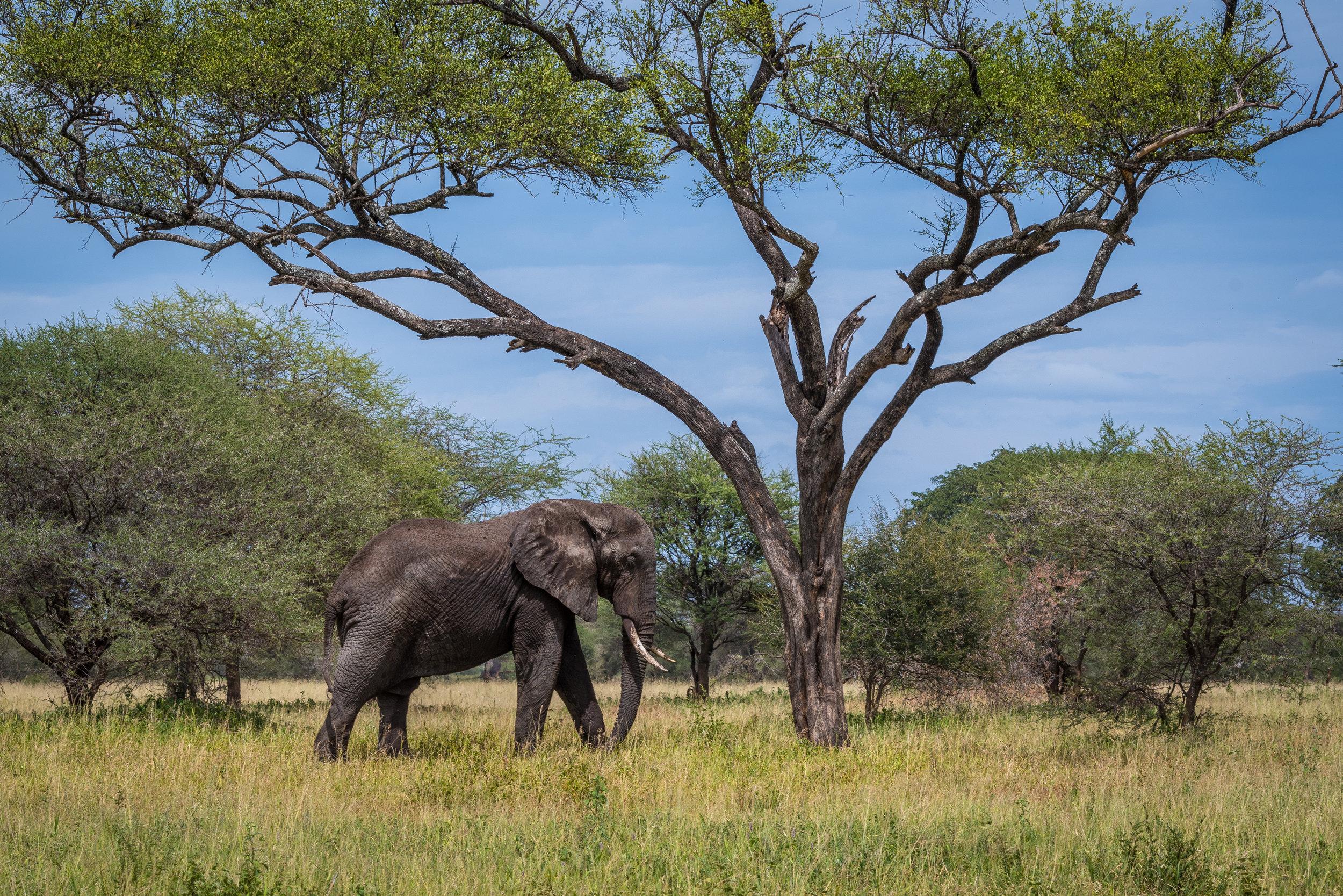 2018-3-6- 03 Elephant.jpg
