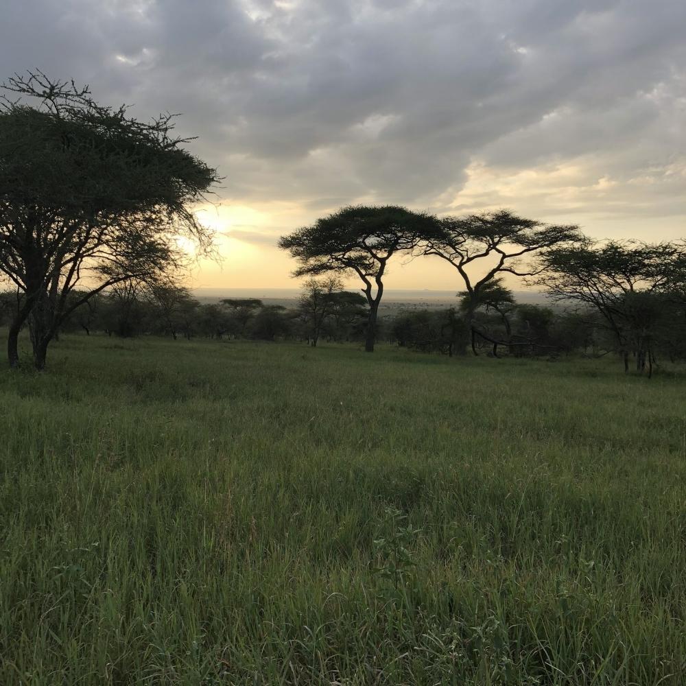 Safari - Tarangarie National Park, Central Serengeti, & Ngorongoro CraterMarch, 6 - March, 10 2018