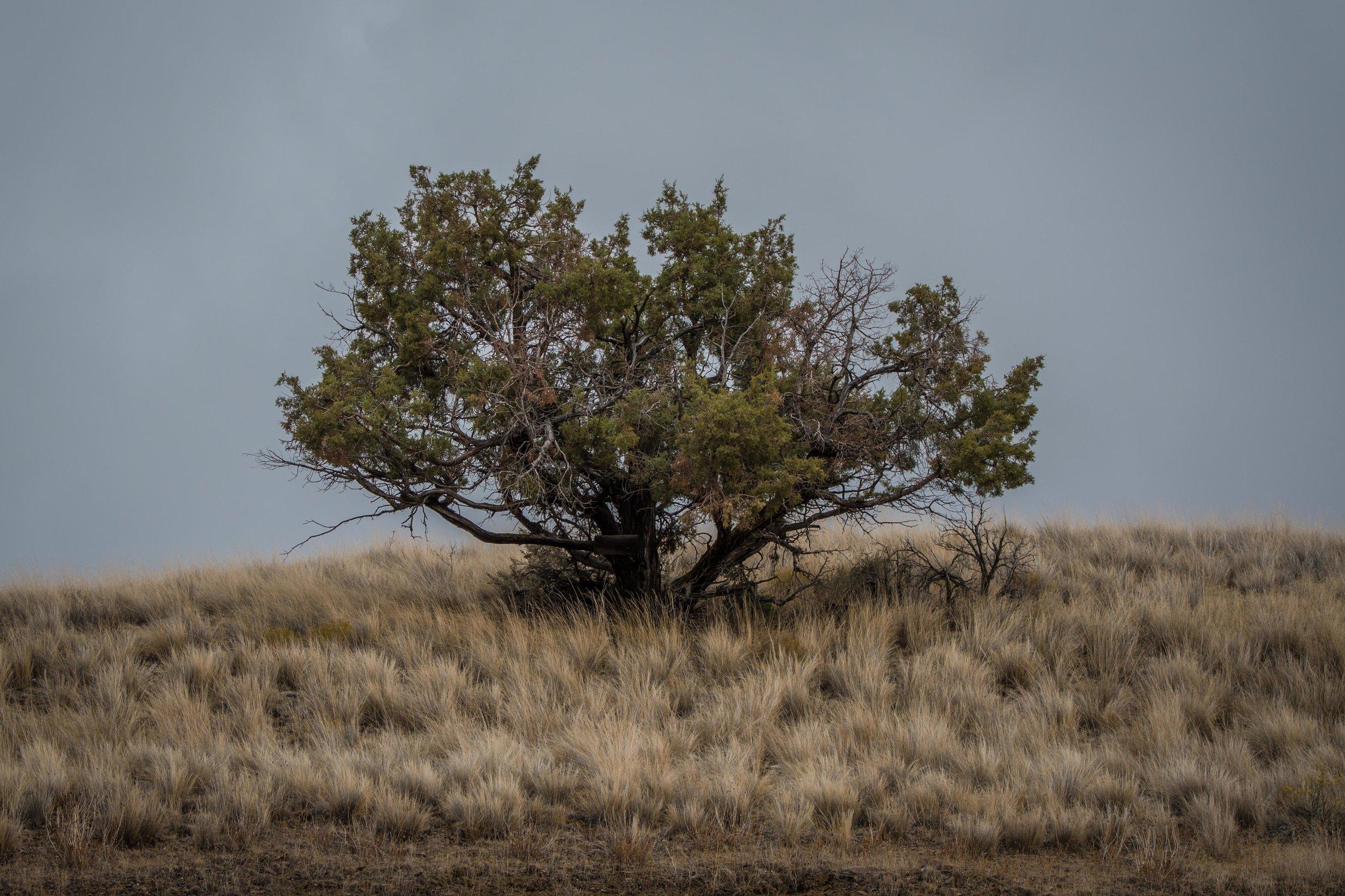 HIGH DESERT - Oregon
