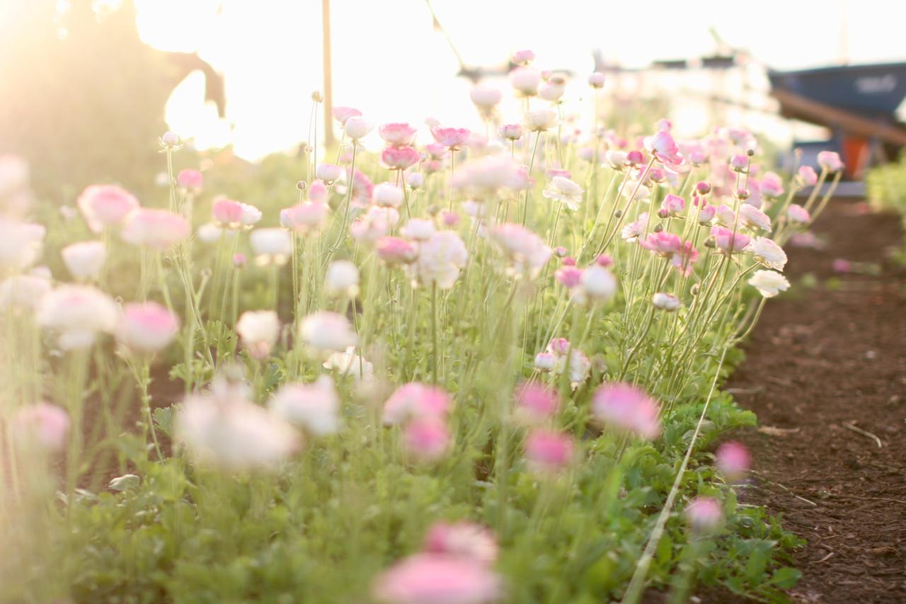 farm scenes 5 copy.jpg