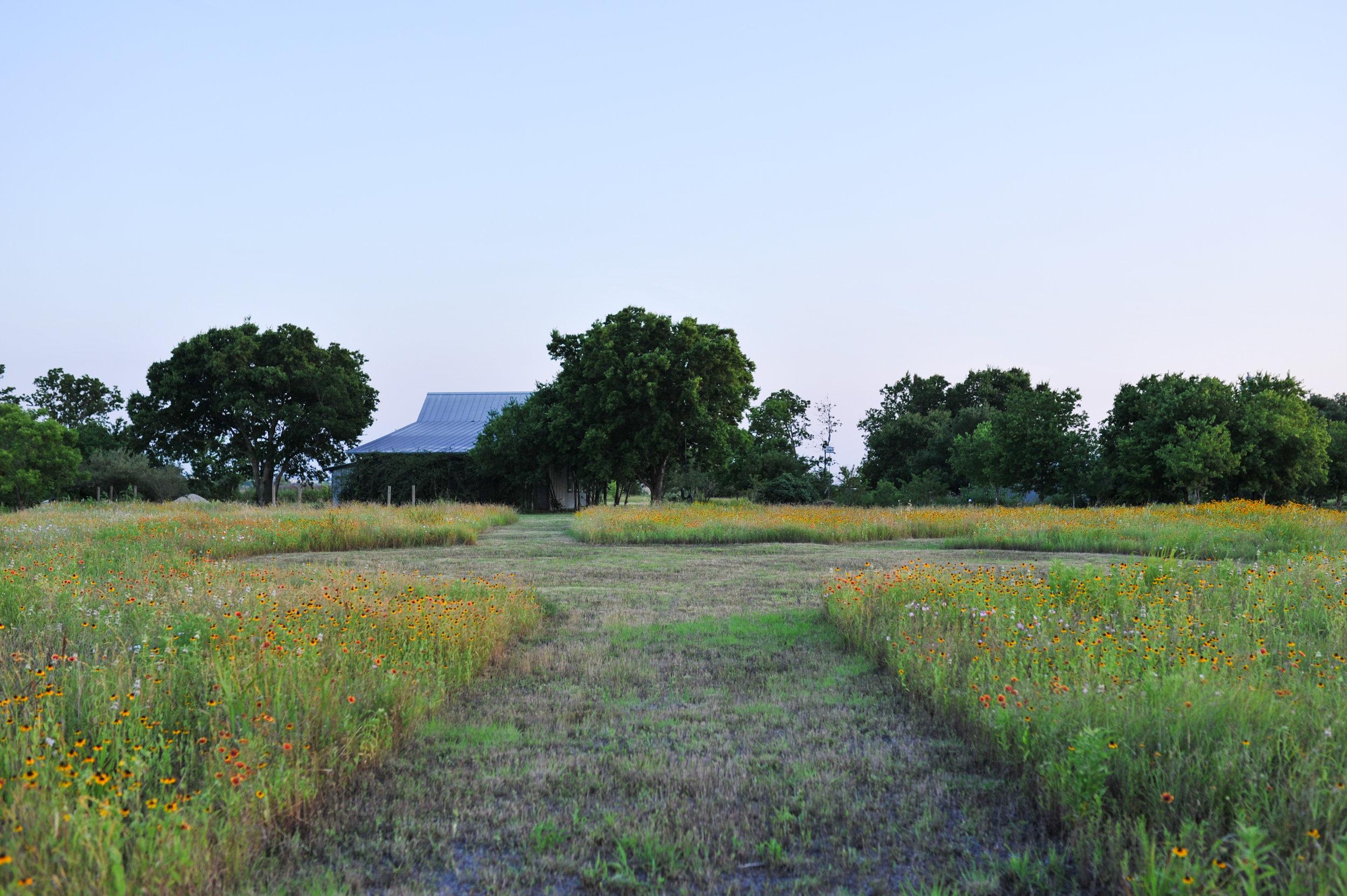 Grassdale wildflower field copy 2.jpg