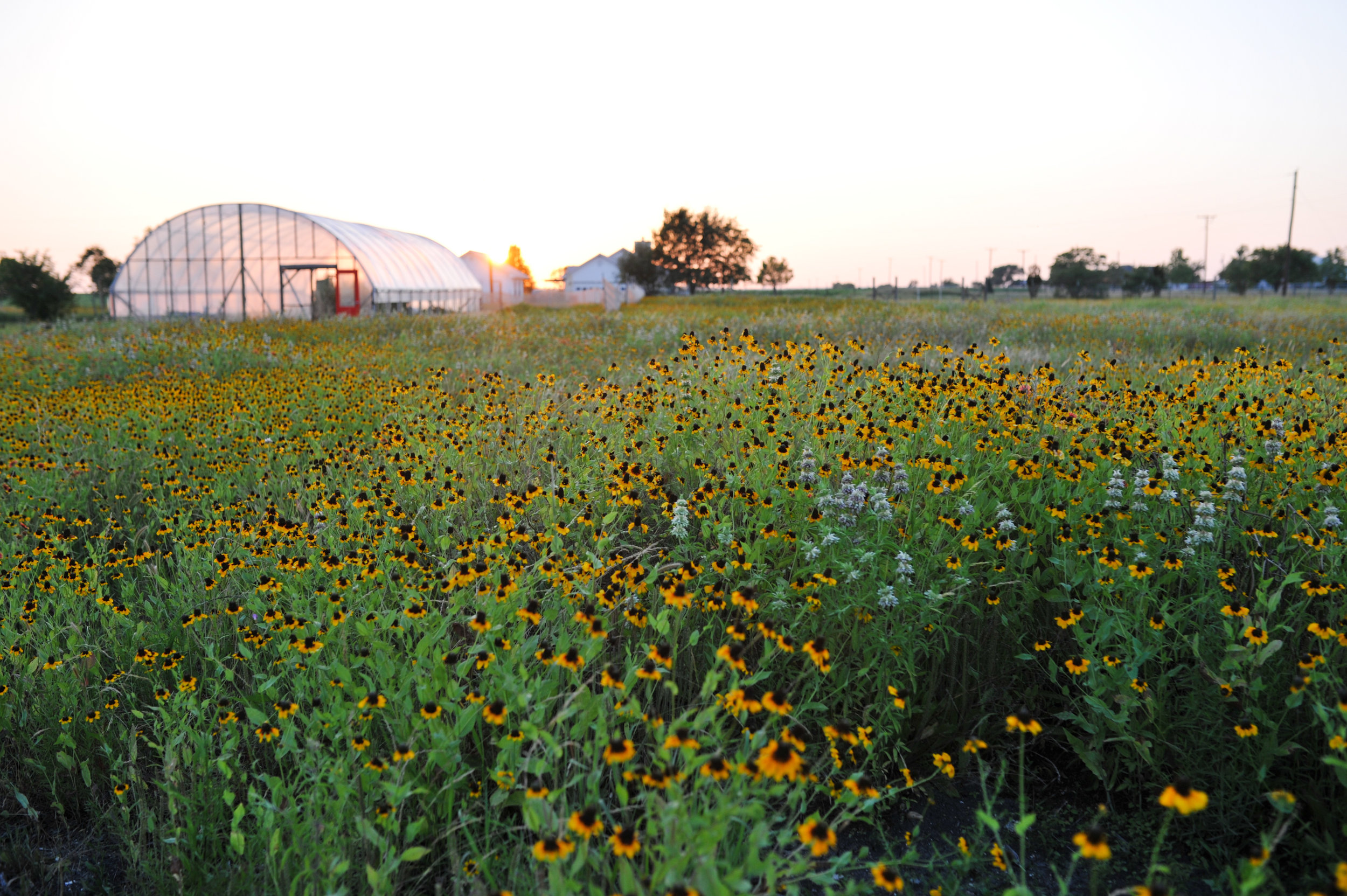 Grassdale wildflowers copy 2.jpg