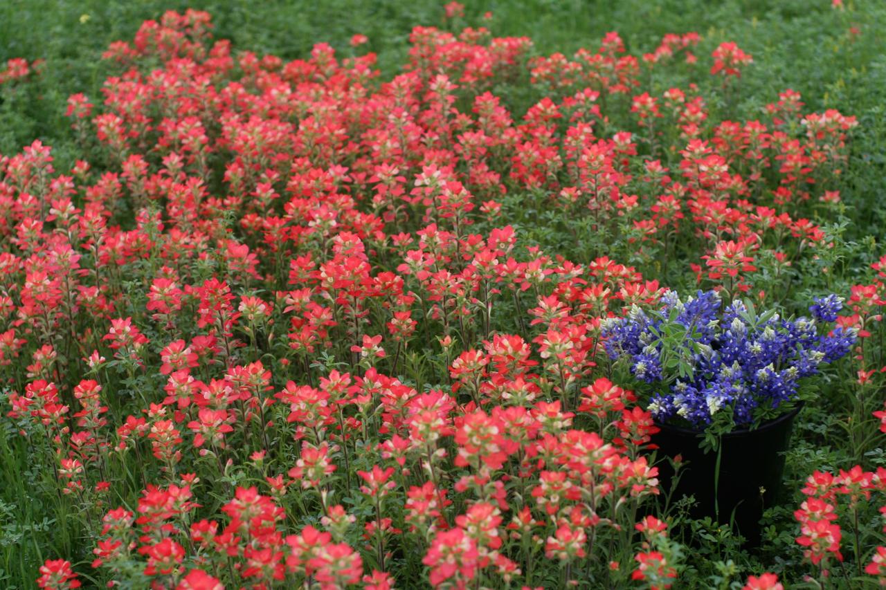 spring flowers 4 copy.jpg