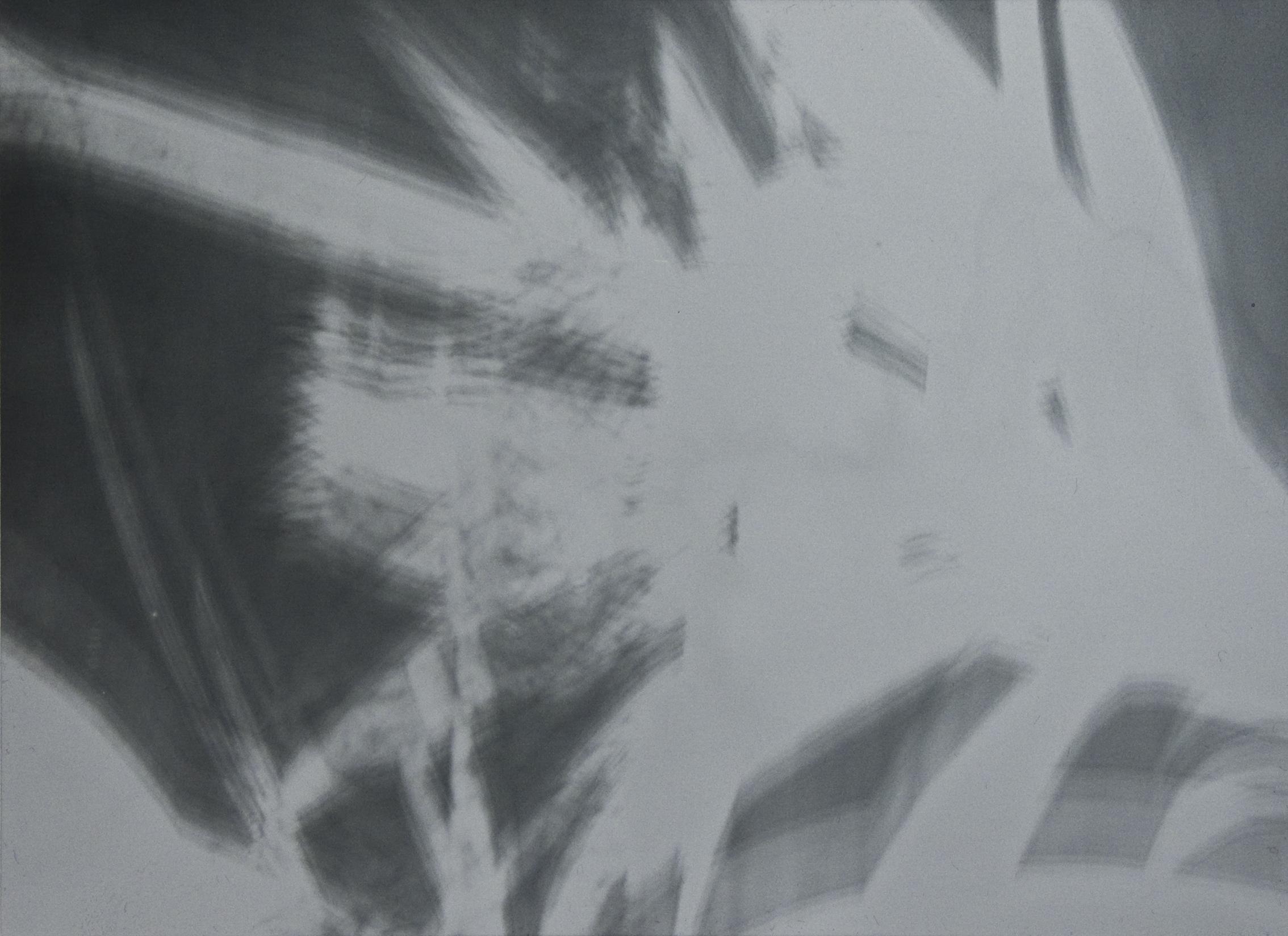 Pflanze im Scheinwerferlicht, Fotogramm auf Dokumentenpapier