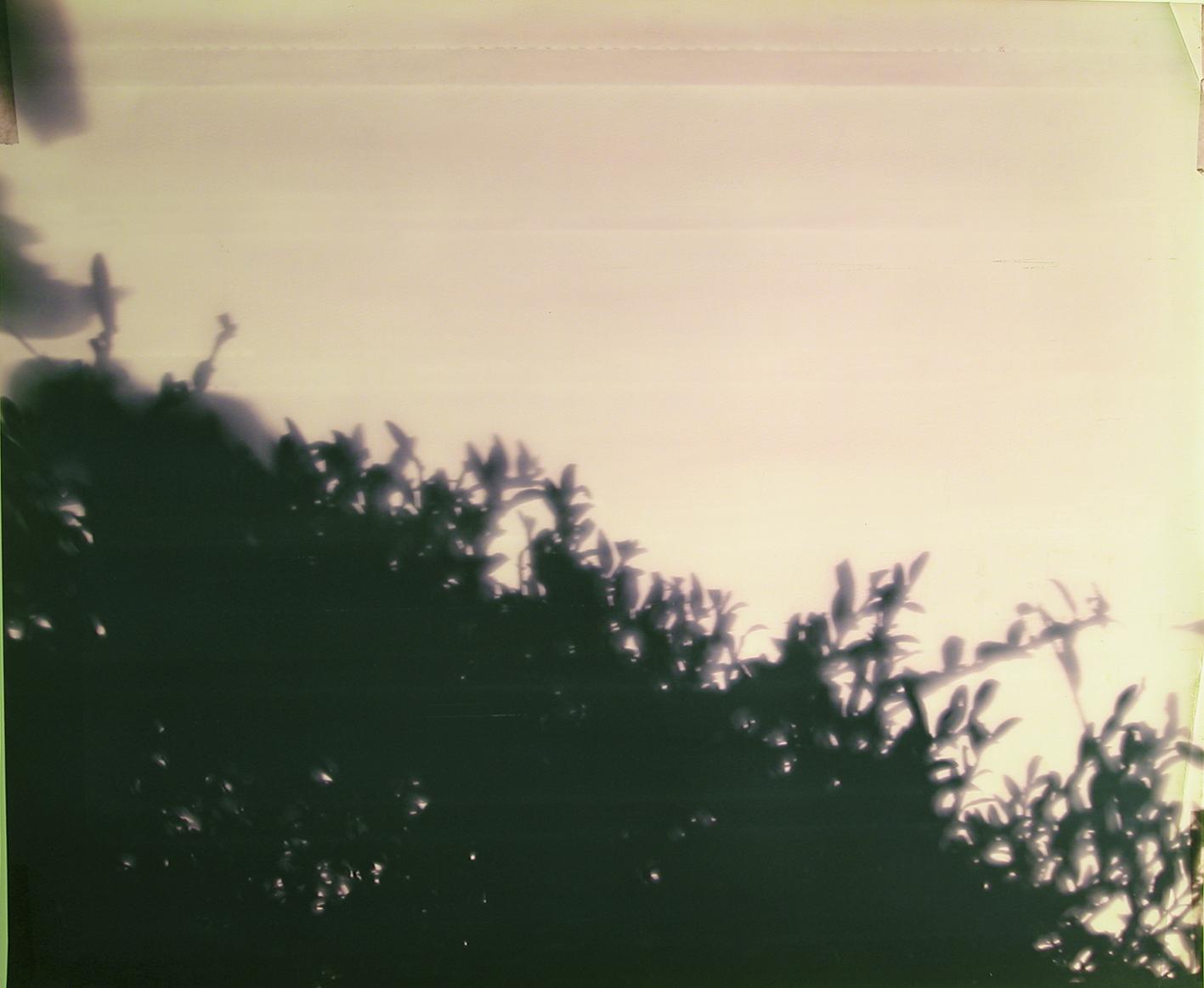 Hecke, Fotogramm auf Farbumkehrpapier