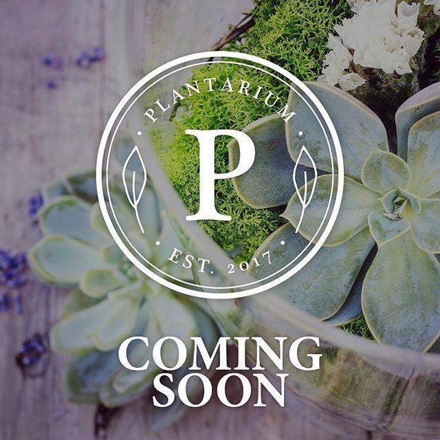 The wait is nearly over 🌿  P L A N T A R I U M  Coming soon! . . . #terrariums #indoorplants #ecofriendly #lovetheearth #plantarium