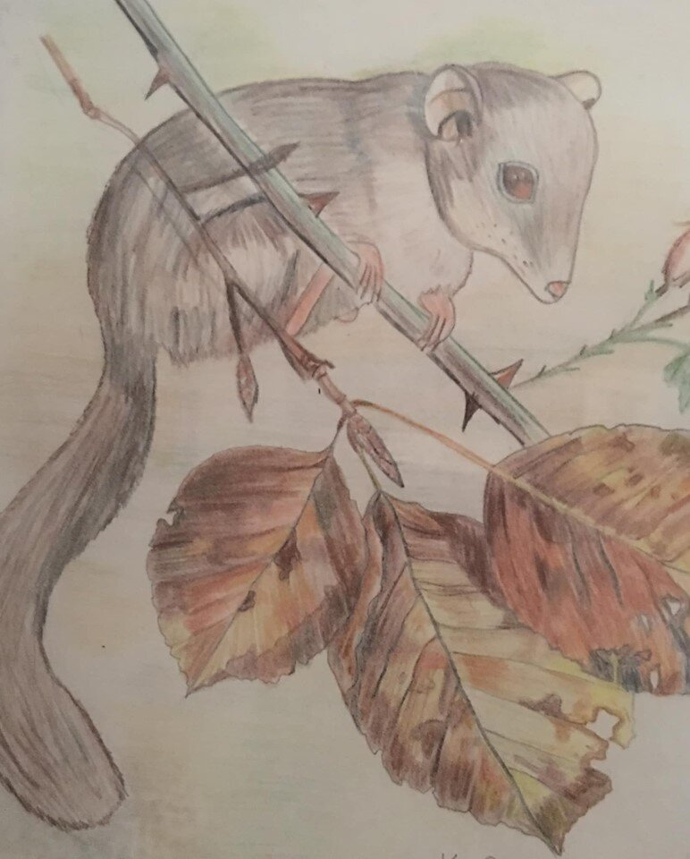We have gliss gliss or edible dormouse in abundance in Buckinghamshire they are quite a pest but incredibly cute - Kim Russell