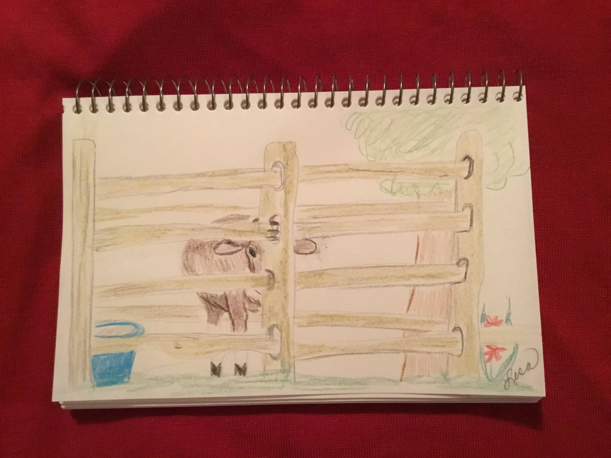 Jersey calf behind fence (you may need to use your imagination! Lisa Muzzey