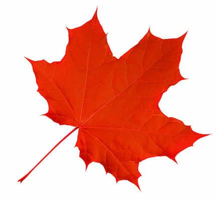 maple red.jpg