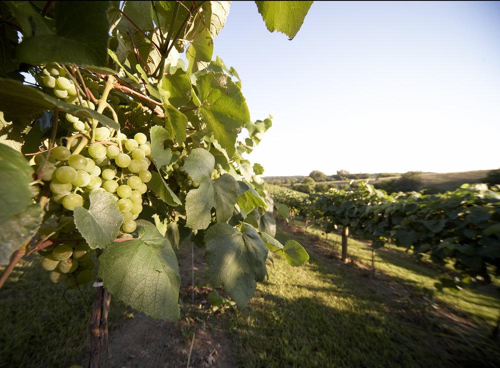 Cedar Ridge Winery in Swisher, Iowa.