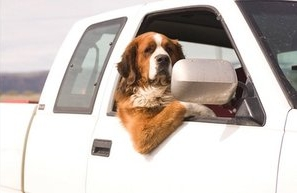 Pets that Travel - If travelling with your pet to the USA, you will require an up-to-date vaccine certificate or other proof of rabies vaccination status. If travelling with your pet, it is best to CONTACT YOUR VETERINARIAN at least 2-4 weeks ahead of time, so that protection against heartworm and other infectious diseases can be provided if necessary