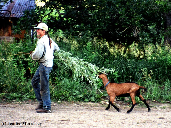 I was once so desperate to redirect one pony's behavior that every evening I harvested willow switches for him to chew on. Yes, the goats often got some, too!