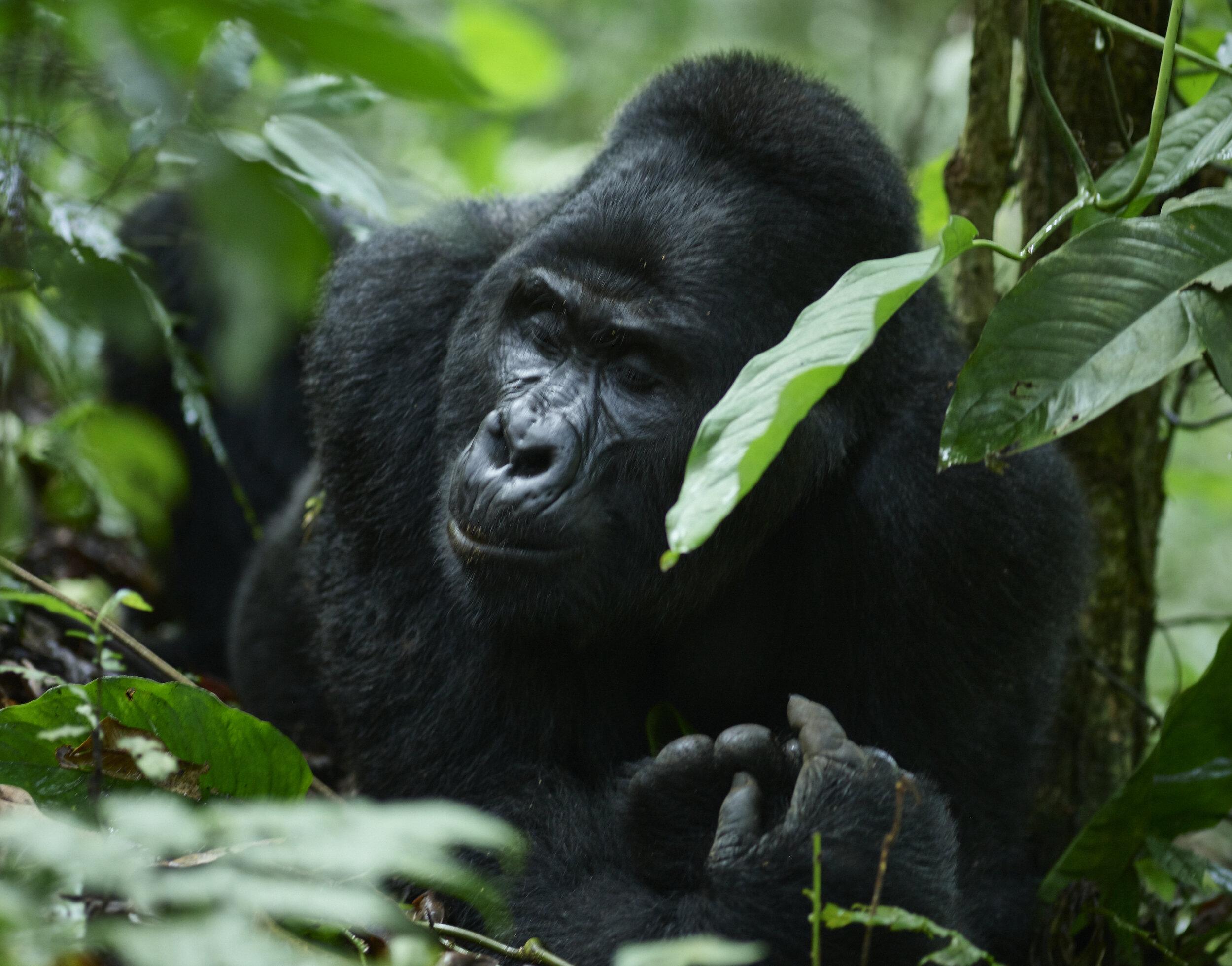 Uganda_P0001233.jpg