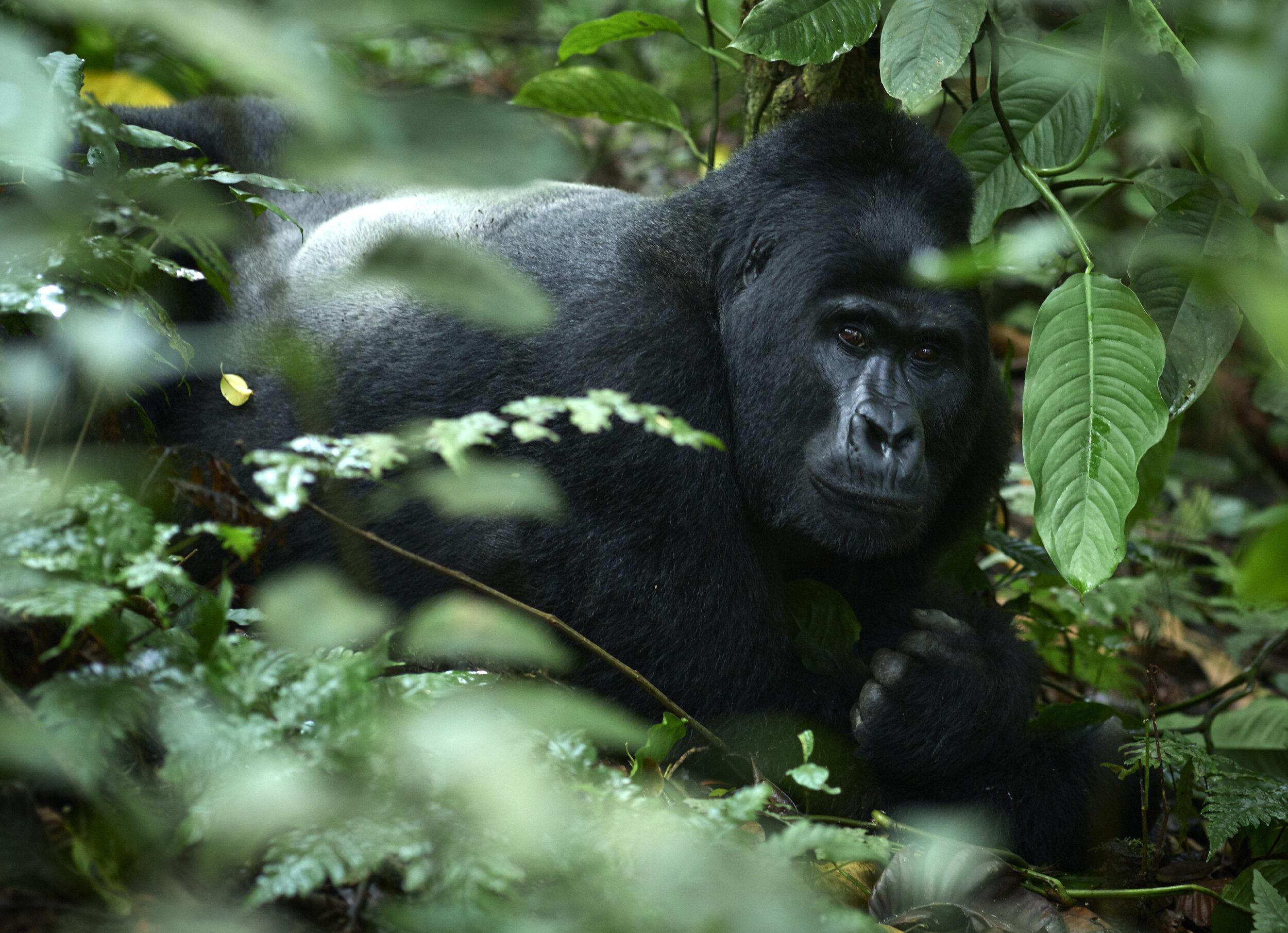 Uganda_P0001239.jpg