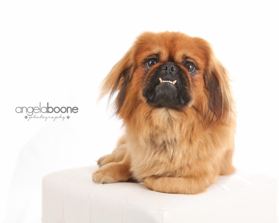 Angela Boone Photography Pets-3570.jpg