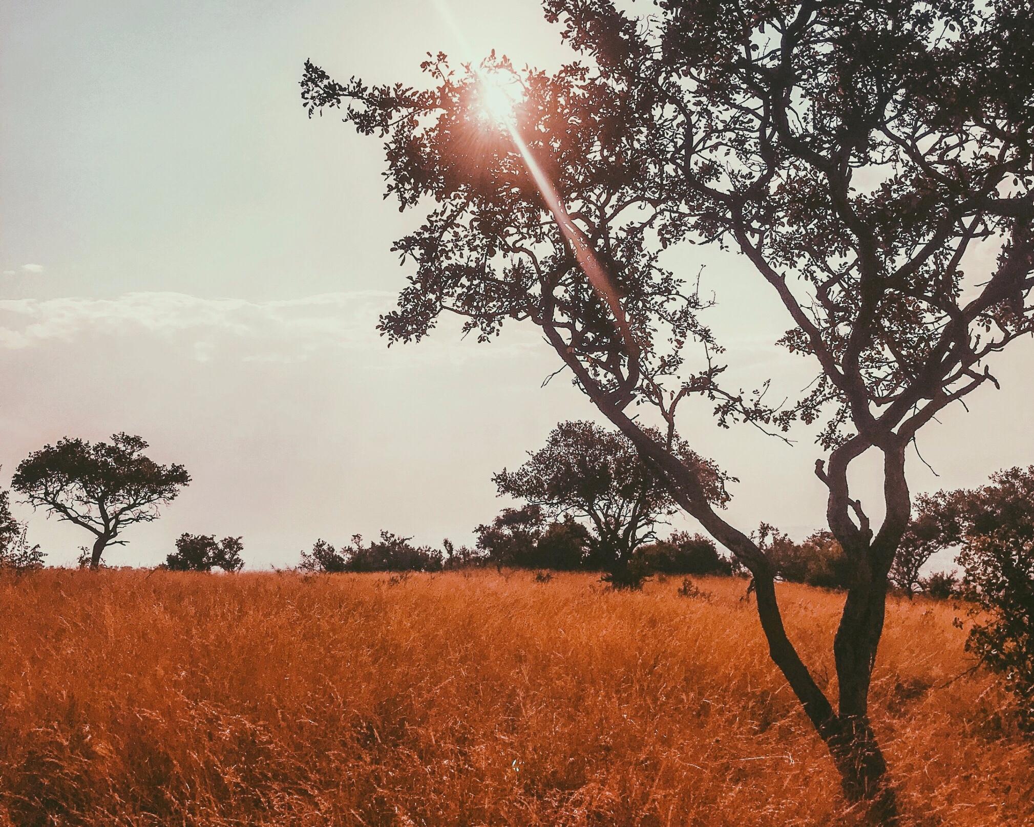 serengeti+sun
