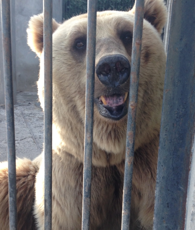 Take a stand against the illegal capture and confinement of animals in Armenia. -
