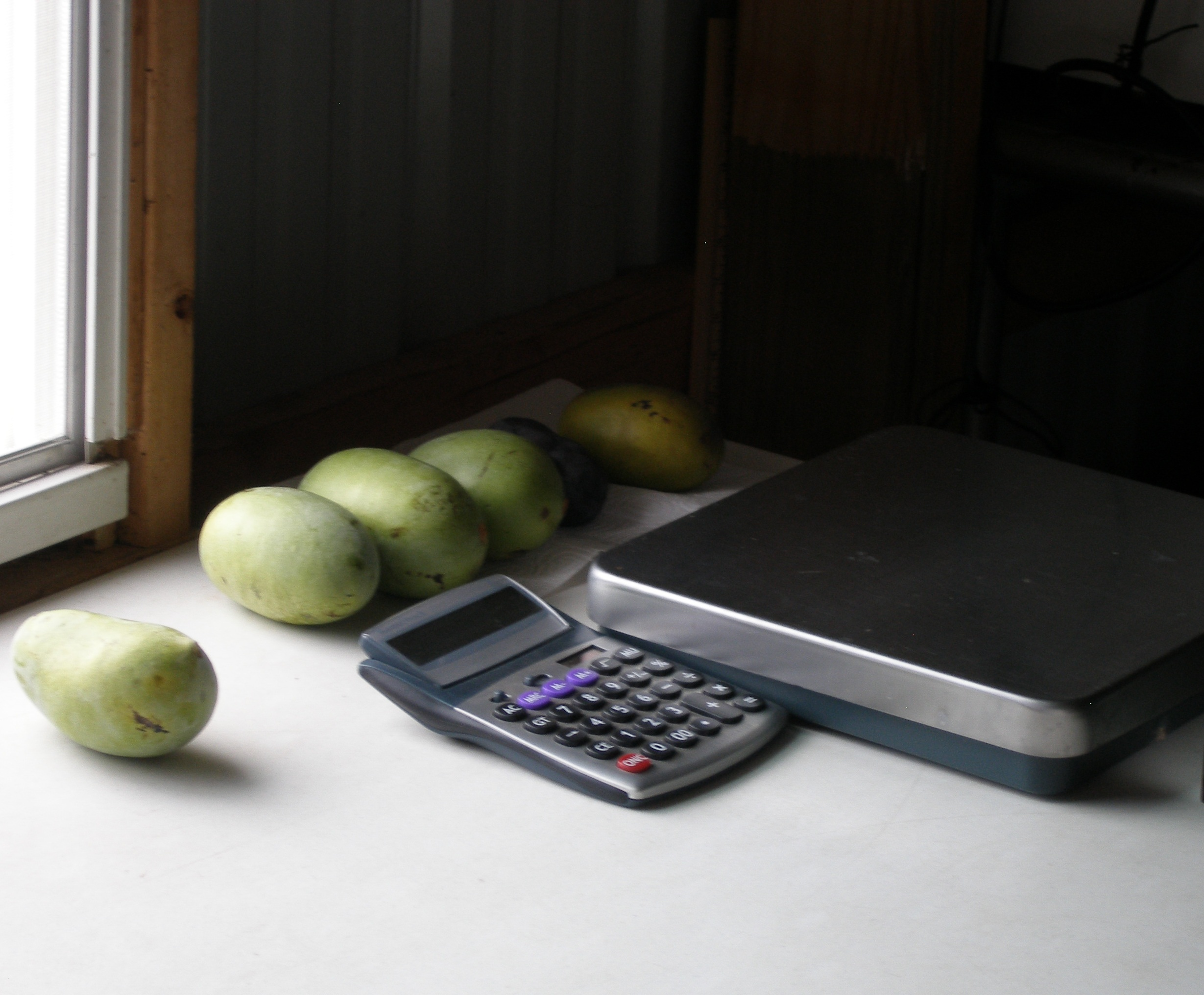 """scale to weigh fruit & seeds to find S-F ratio"""