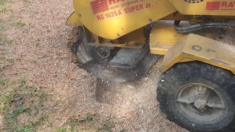 stump grind removal root conroe woodlands spring