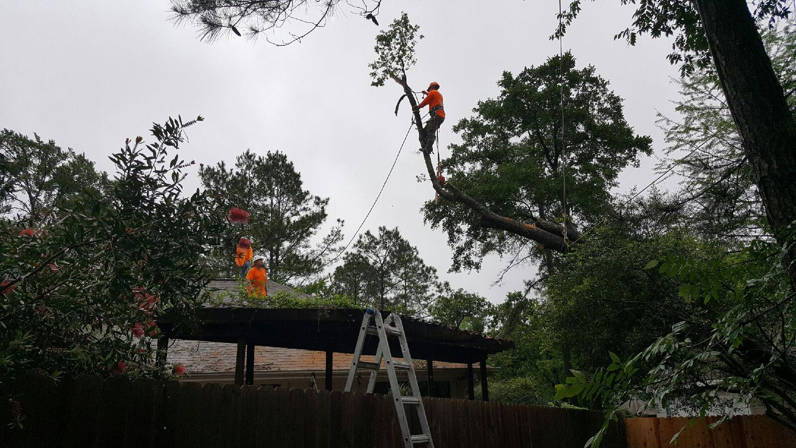 The Woodlands (left and right): Removing a fallen tree on a client's roof/patio after lightening and thunderstorm