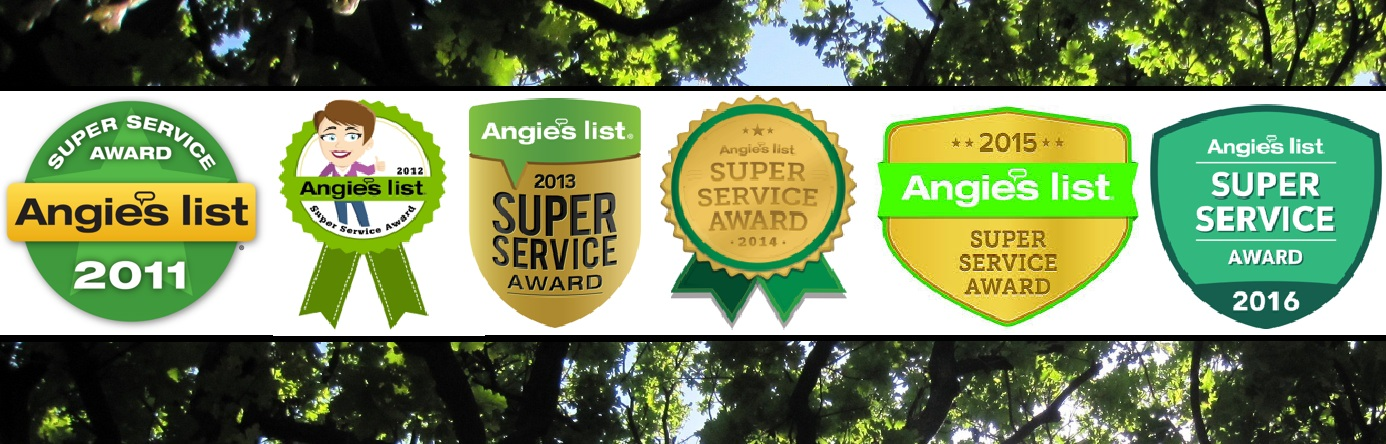 angies list super service best reviewed five 5 star tree service near me