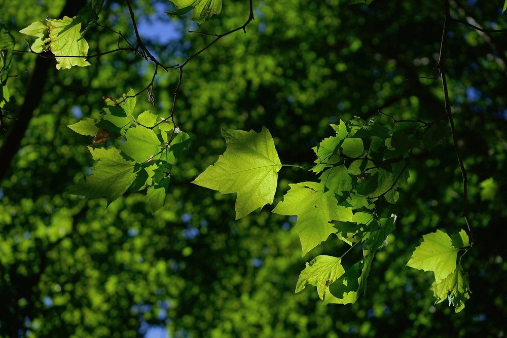 Contact Rothco Tree Service Woodlands Spring Conroe