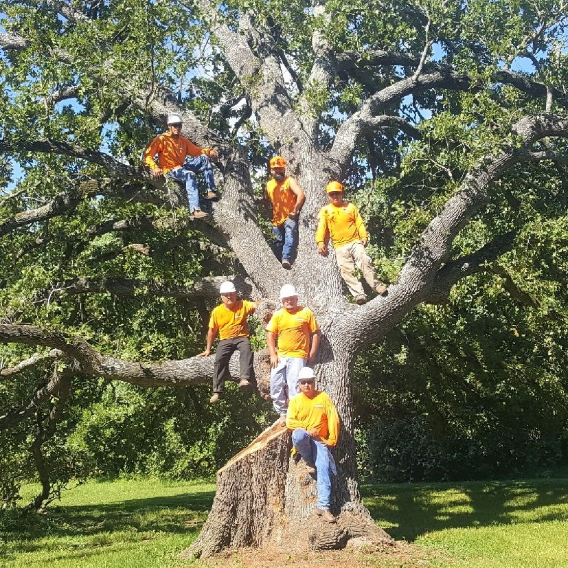 The Rothco crew after a large tree removal job in Magnolia, TX