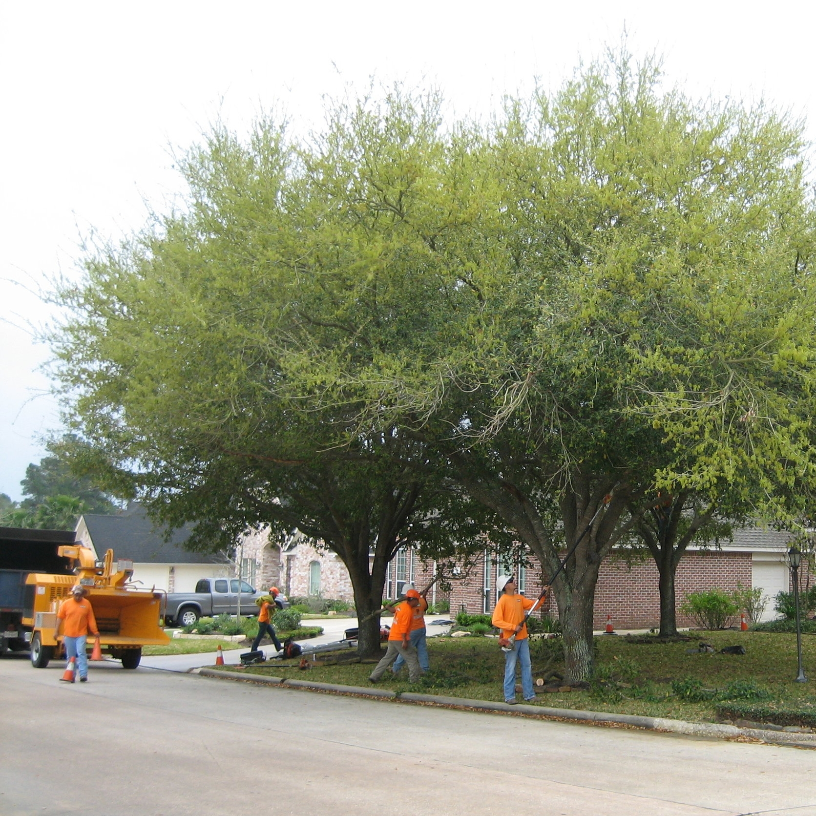 Branch and tree trimmers removers