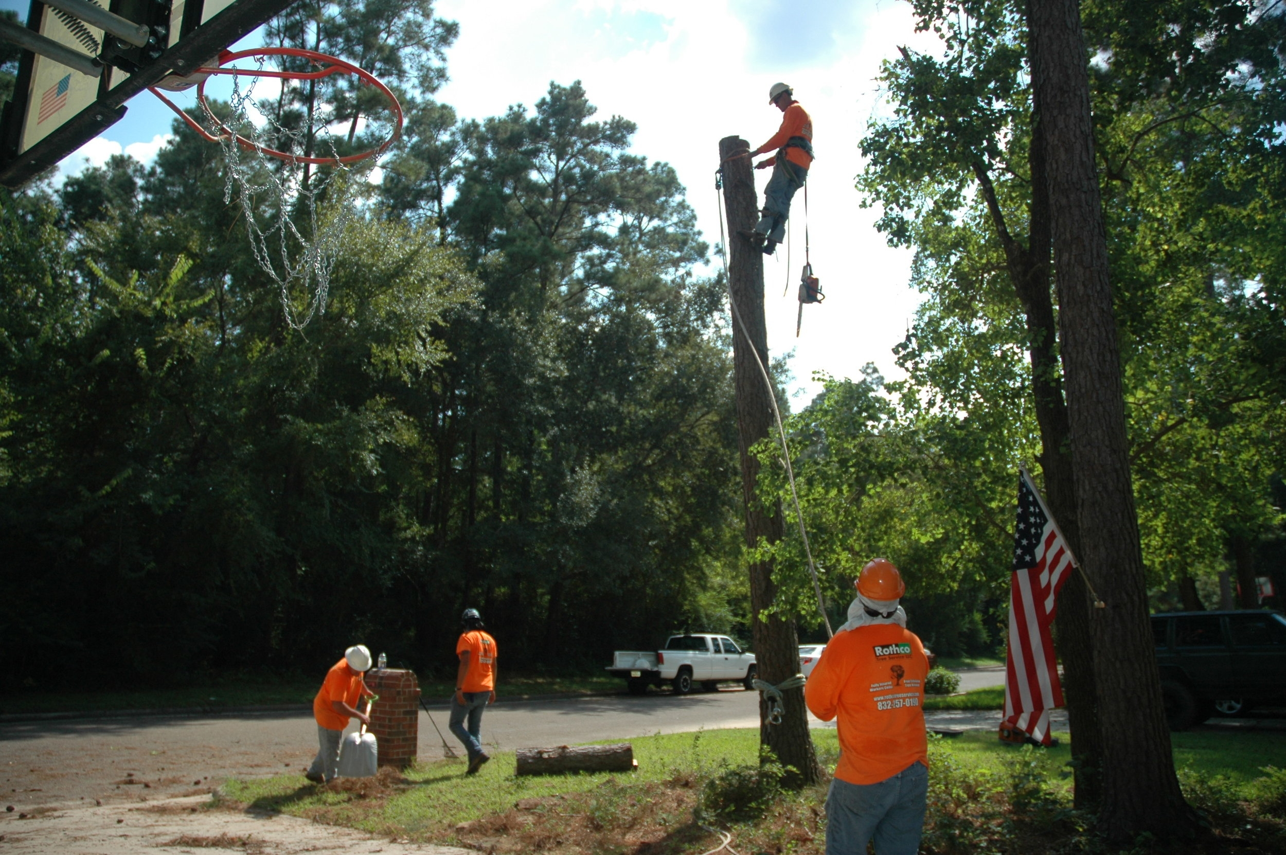 tree climbers in woodforest, tx removing trunk