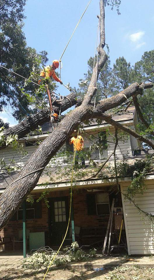 tree fell on roof of home after lightening storm