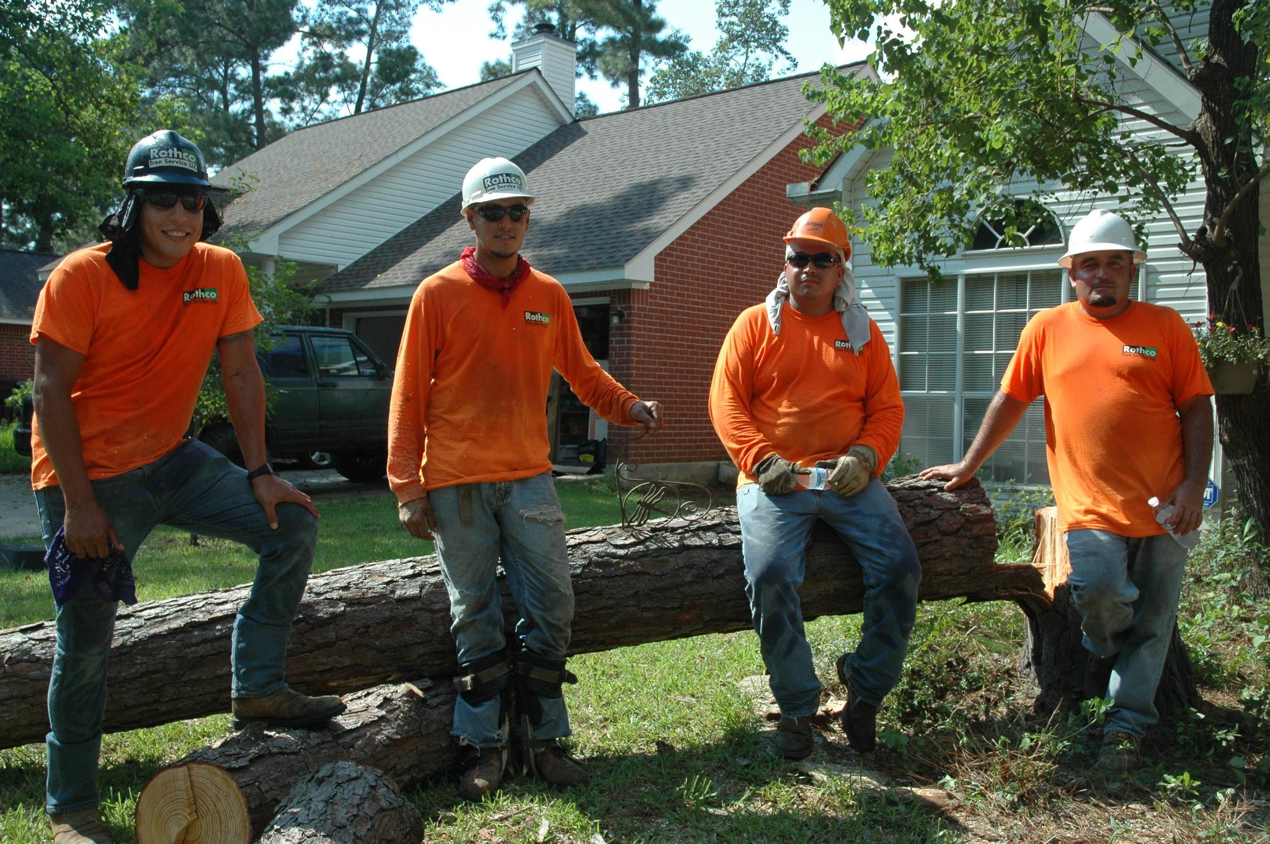Professional Tree Service 1