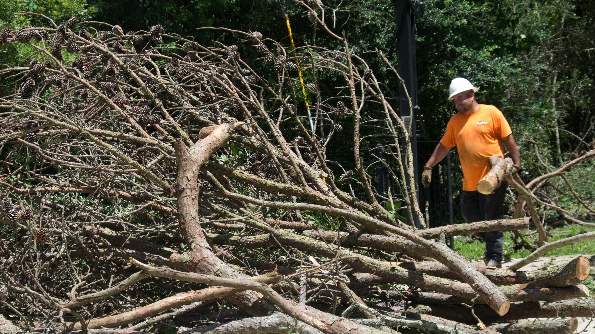 branch and limb removal with debris haul away