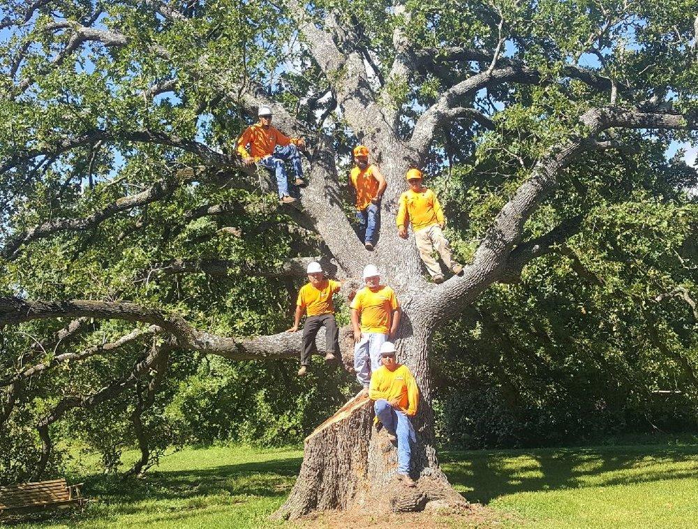 Rothco Tree Service Crew