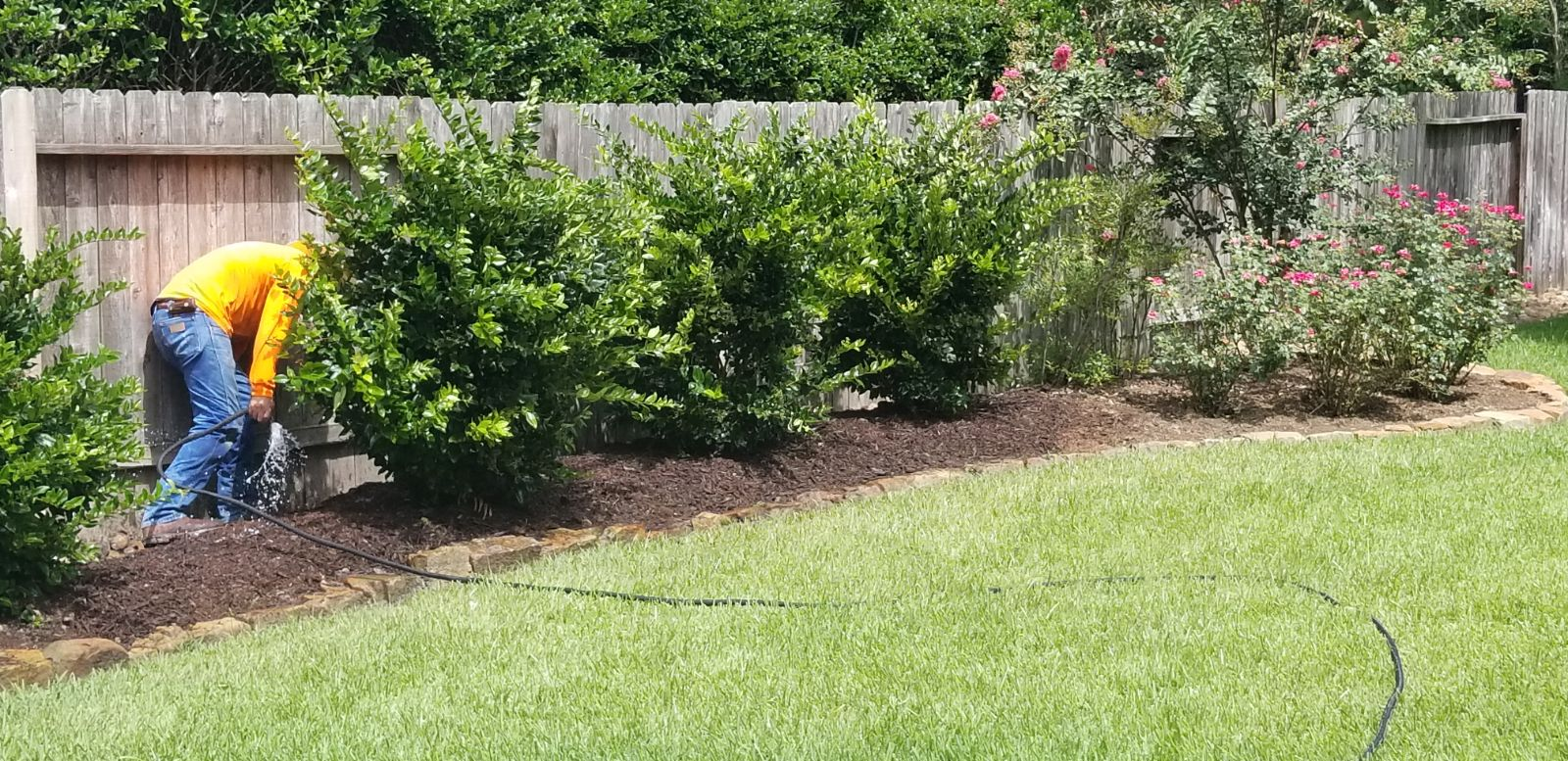 Ligustrums Planted.jpg