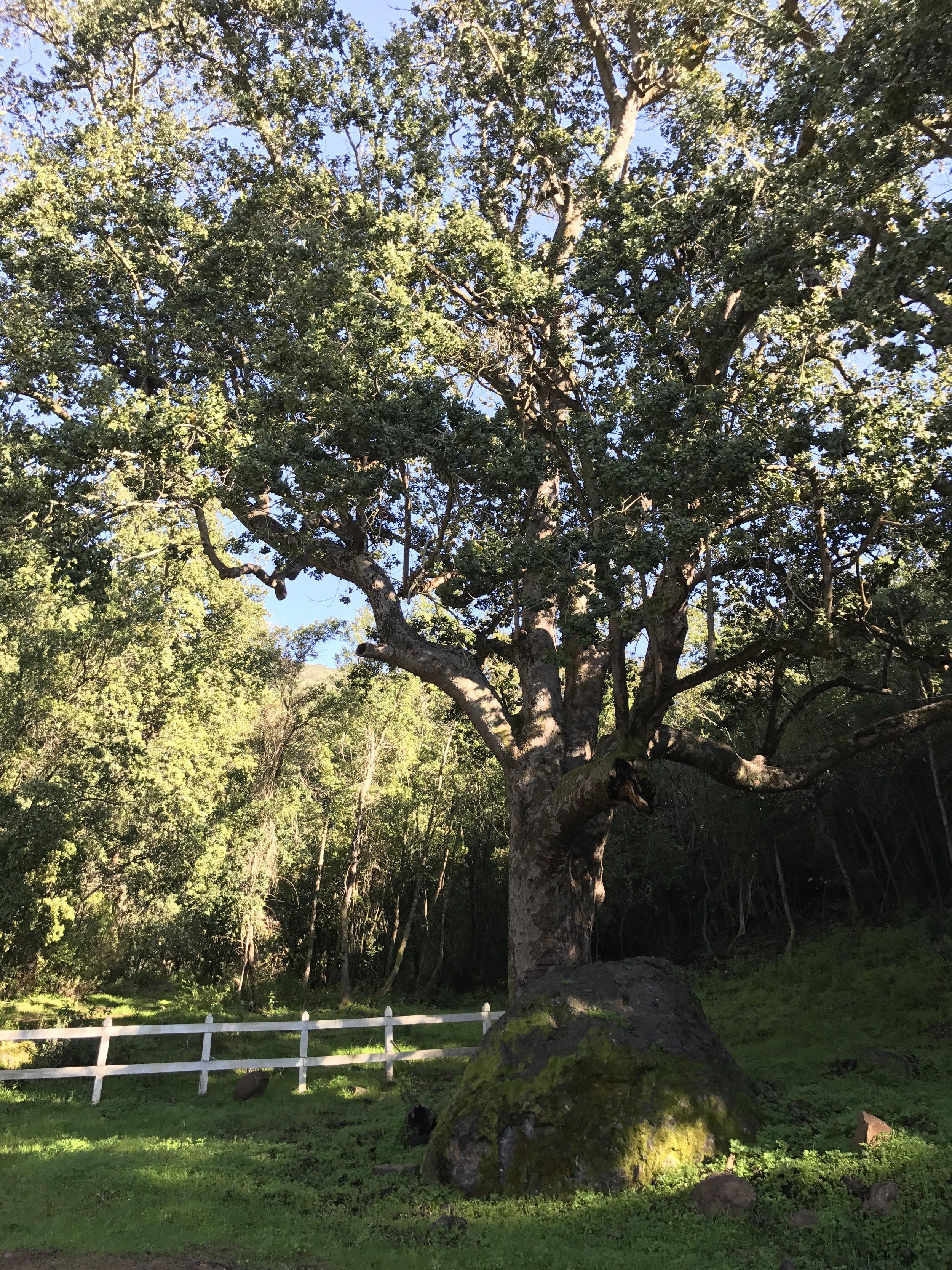 Árboles nativos