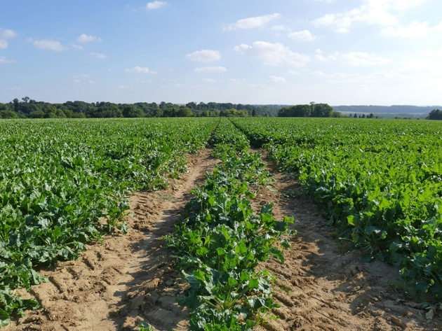 Vegetable Growers Avoid Compaction Too