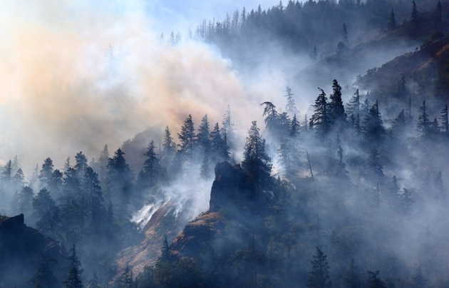 Forestry Management and Wildfires