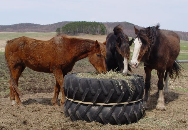 Giving Retired Tires a Second Career on the Farm