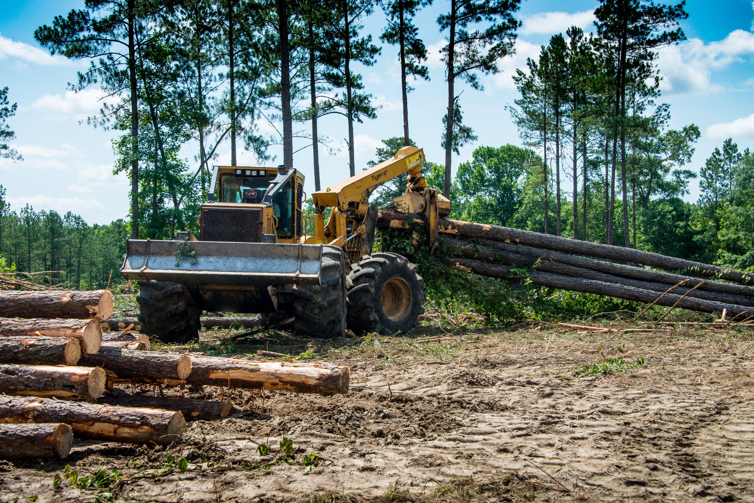 From Tree to Timber to Transport: Alliance Tire Group