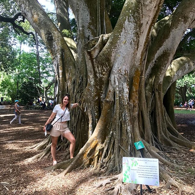 Back in Sarasota and still in awe of the trees here 🙌🏻 #botanicalgardens #florida #treeoflife