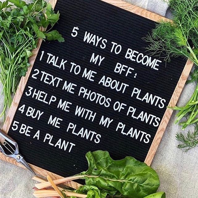 Dedicated to all my plant people 🌱  @meandmymole @allisonalyse @heartseedsforest @gingerwebbherbalist  #plantlover