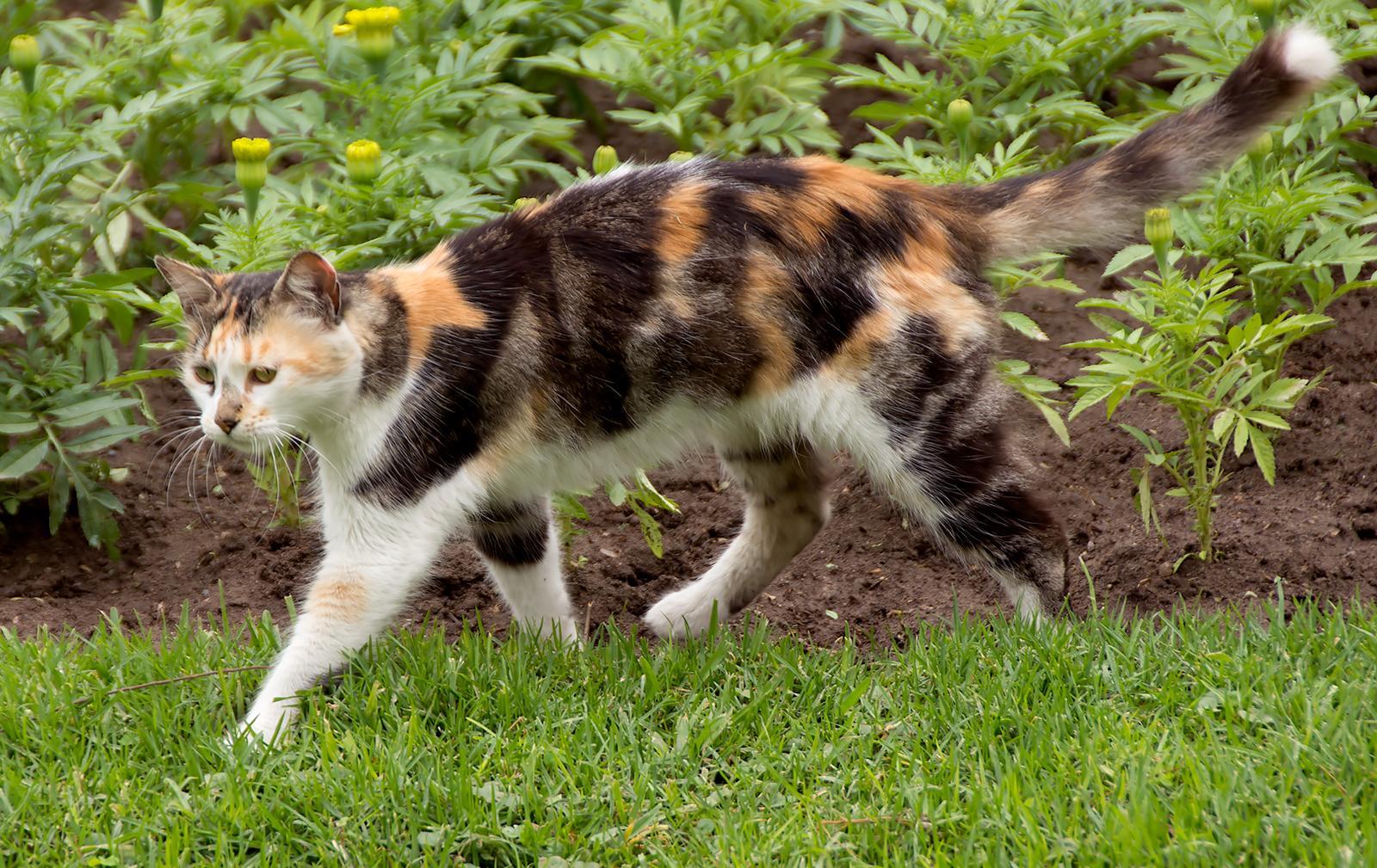 CatPark3.jpg
