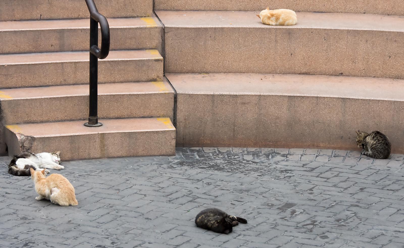 CatParkRound2.jpg