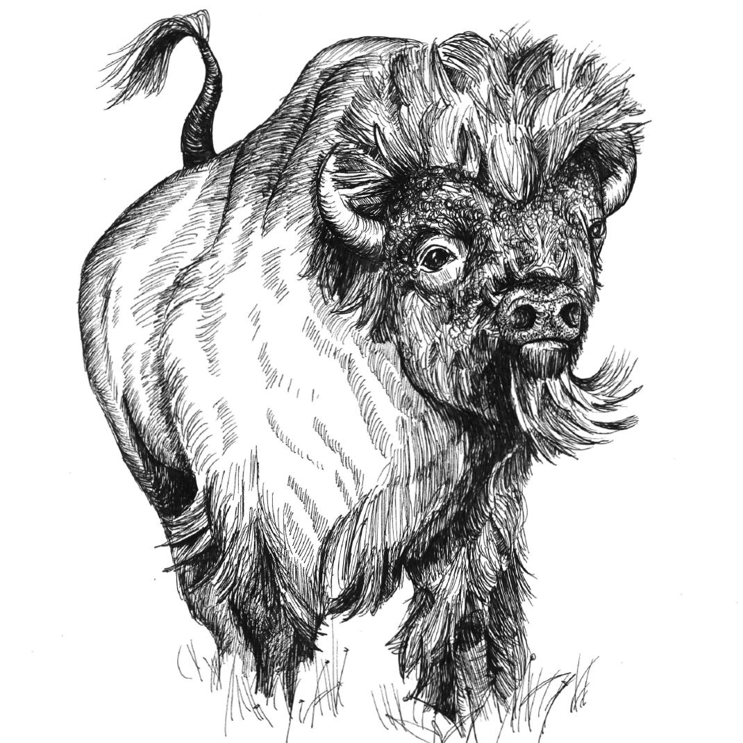 ellie fusco buffalo.jpg