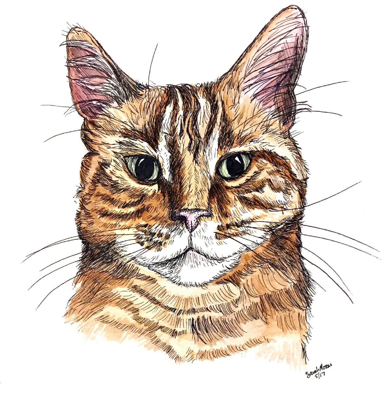 cat illustration cayla.jpg