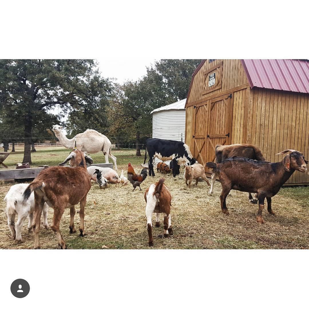 Oliver & Goats.jpg